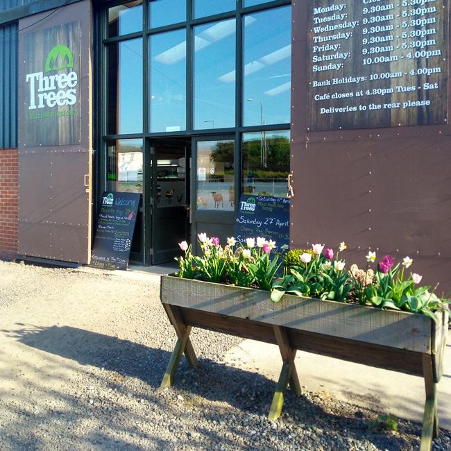 Three-trees-tulips