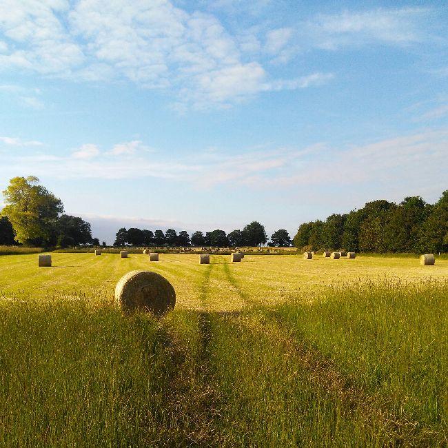 bales farm
